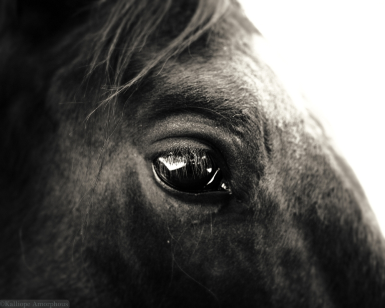 horse-photography18