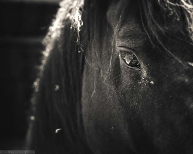 horse-photography25