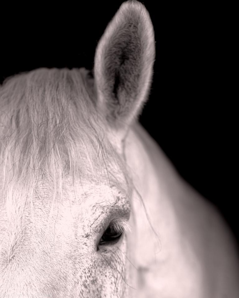 white horse storm
