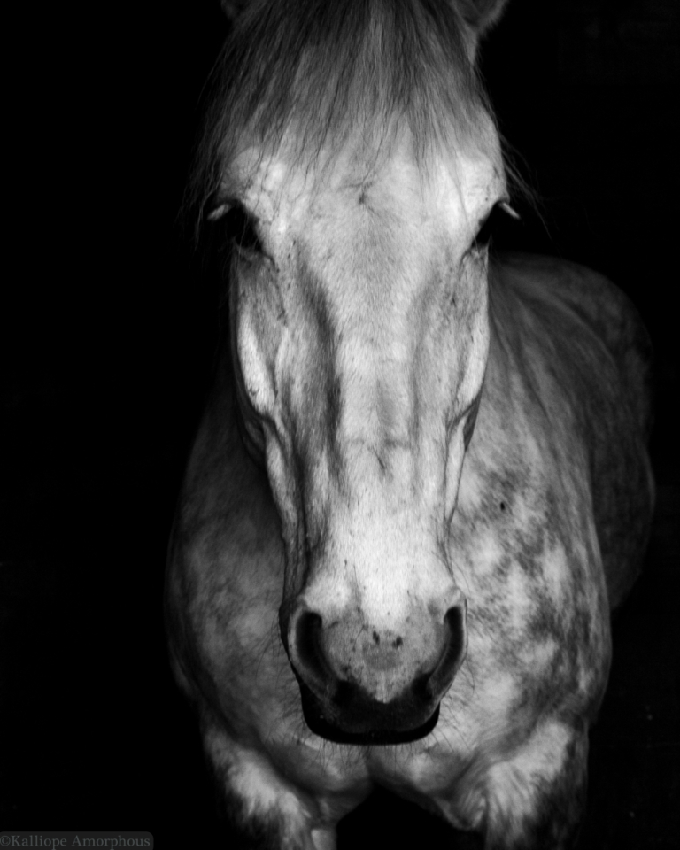 horse-photography37