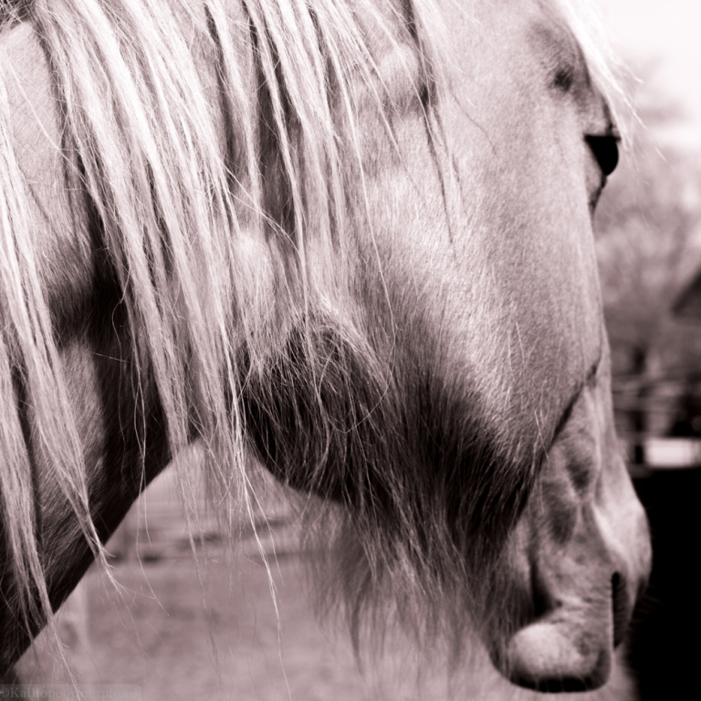 horse-photography8